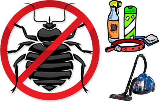 Ways Of Getting Rid Pf Fleas